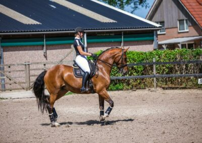 Paardenfotografie - de Paardenfotograaf