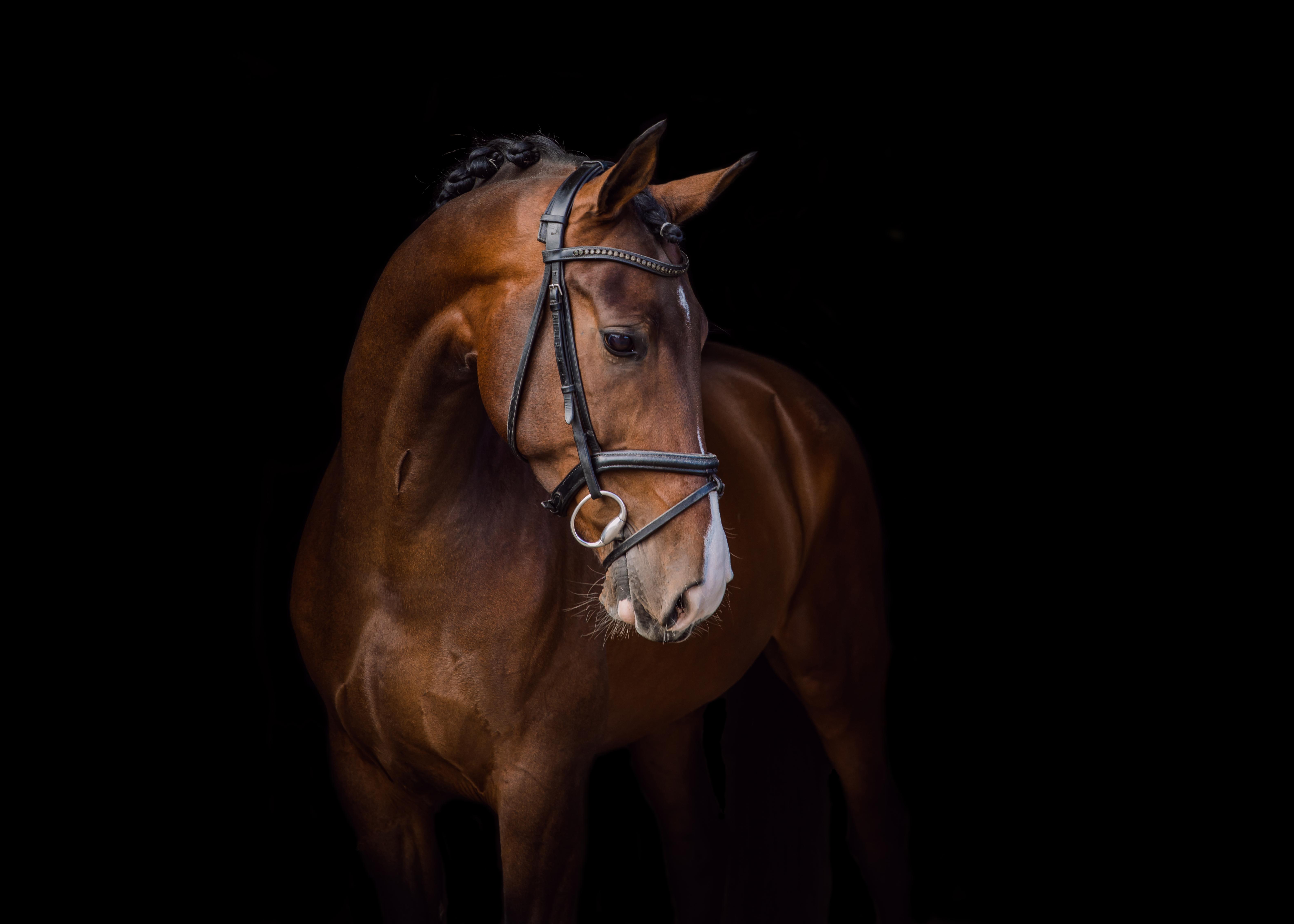 Blackphoto paard
