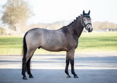 foto's verkoop paard